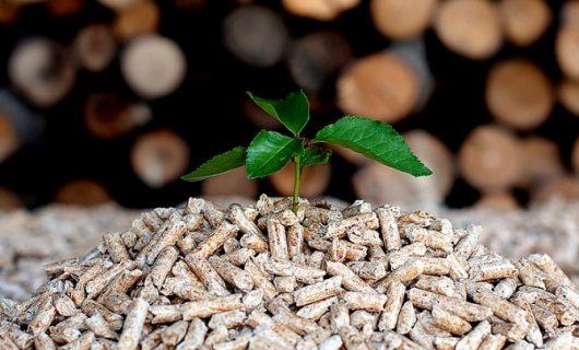 biomasa anastasio teruel Albacete